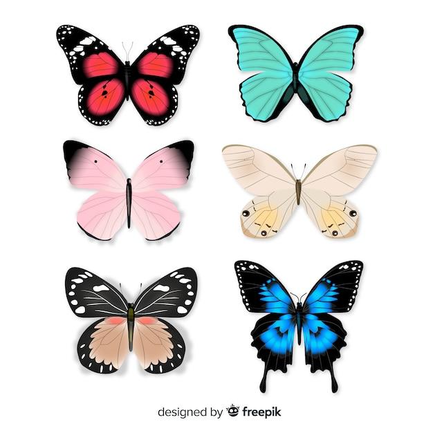 Coleção de borboletas Vetor grátis