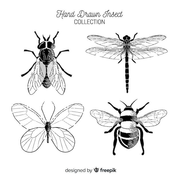 Coleção de bug incolor de mão desenhada Vetor grátis