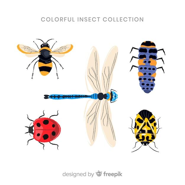 Coleção de bugs coloridos realistas Vetor grátis