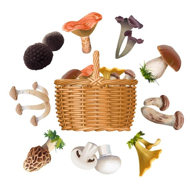 Coleção de cogumelos comestíveis de várias espécies e cesta Vetor grátis