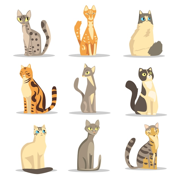 Coleção de diferentes raças de gatos, ilustrações de animais de estimação fofos Vetor Premium