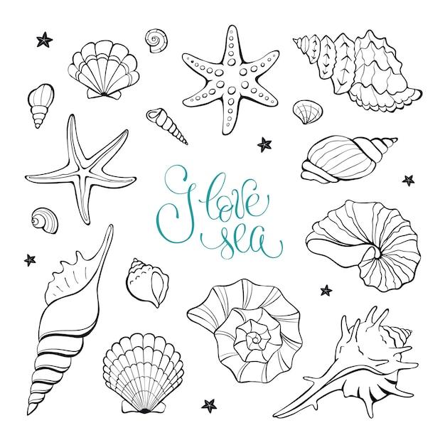 Coleção de elementos de conchas do mar Vetor Premium