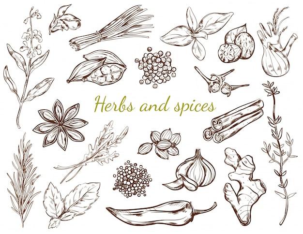 Coleção de ervas e especiarias Vetor grátis