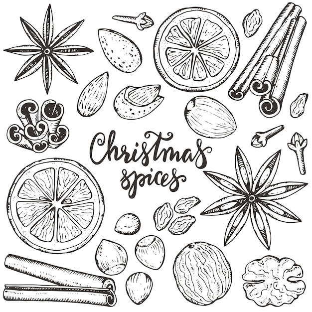 Coleção de especiarias e frutas cítricas de natal Vetor Premium