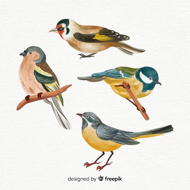 Coleção de estilo aquarela de pássaros Vetor grátis