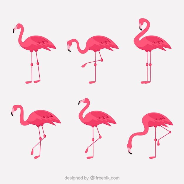Coleção de flamingos com diferentes posturas em estilo simples Vetor grátis