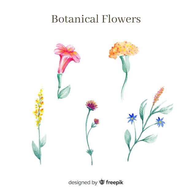 Coleção de flores botânicas em aquarela Vetor grátis
