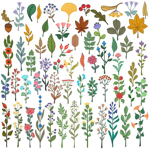 Coleção de flores coloridas elementos florais flores folhas bagas e ramos Vetor grátis