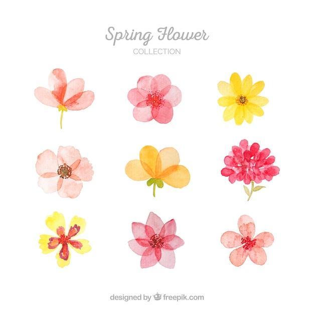 Coleção de flores da primavera Vetor Premium