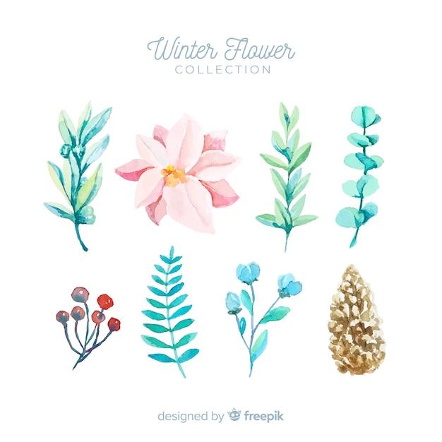 Coleção de flores de inverno Vetor grátis