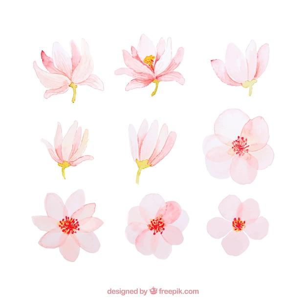 Coleção de flores de primavera de aquarela rosa Vetor grátis