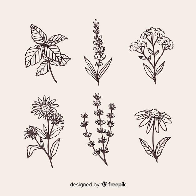 Coleção de flores desenhadas mão realista Vetor grátis