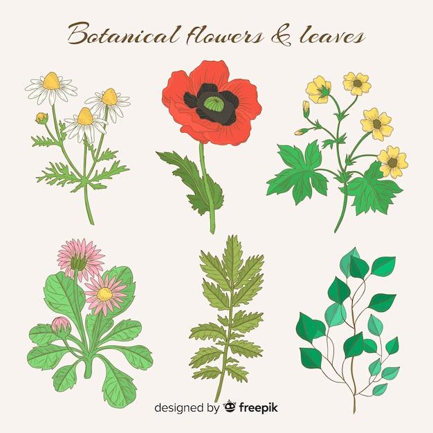 Coleção de flores e folhas botânica vintage Vetor grátis