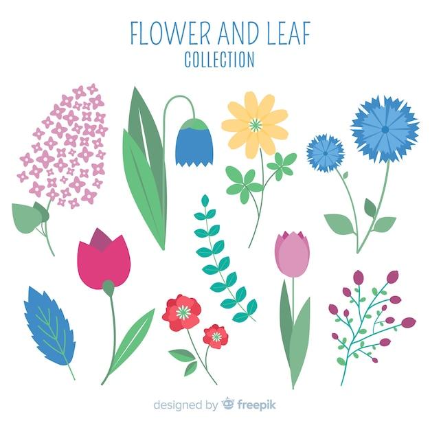 Coleção de flores e folhas Vetor grátis