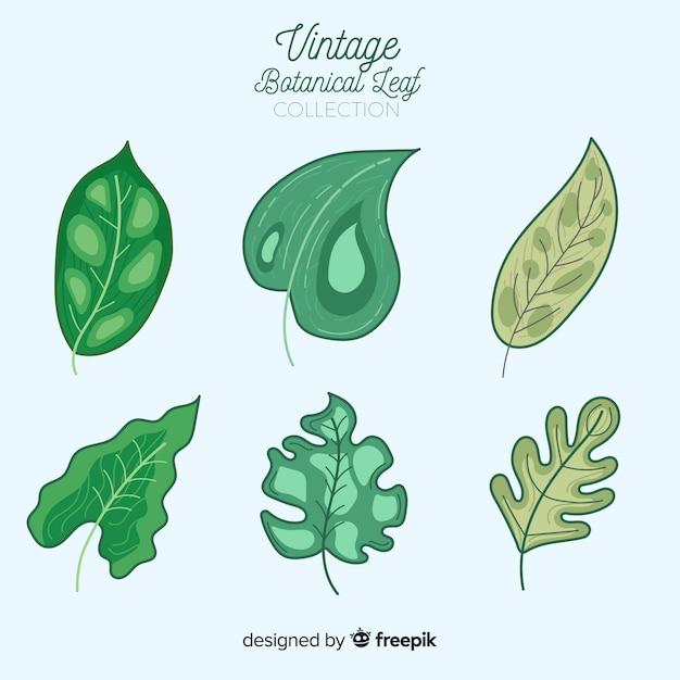 Coleção de folha botânica vintage Vetor grátis
