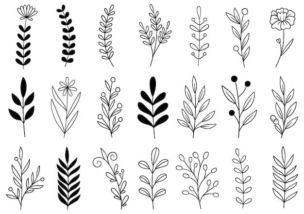 Coleção de folhagens artísticas de eucalipto Vetor Premium