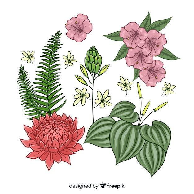 Coleção de folhas e flores tropicais Vetor grátis