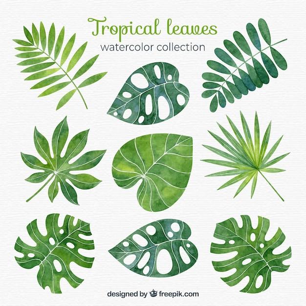 Coleção de folhas tropicais em estilo aquarela Vetor grátis
