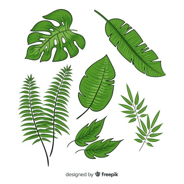 Coleção de folhas tropicais Vetor grátis