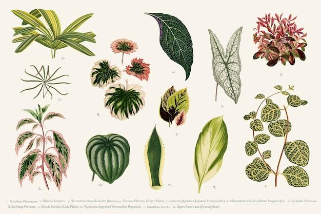 Coleção de folhas Vetor grátis