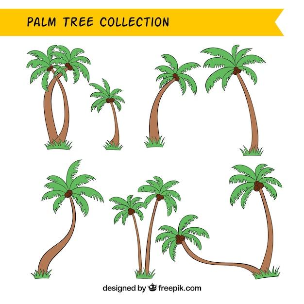 Coleção de hand-drawn palmeiras Vetor grátis