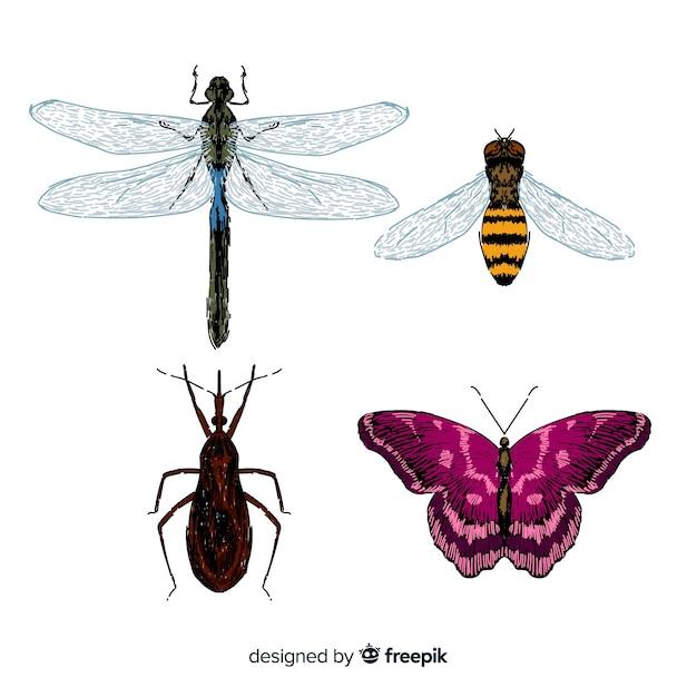 Coleção de insetos coloridos mão desenhada Vetor grátis