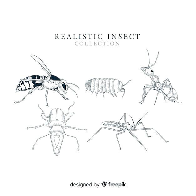 Coleção de insetos desenhada mão realista Vetor grátis