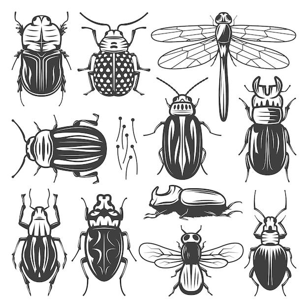 Coleção de insetos vintage com libélula voadora e diferentes tipos de insetos e besouros isolados Vetor grátis