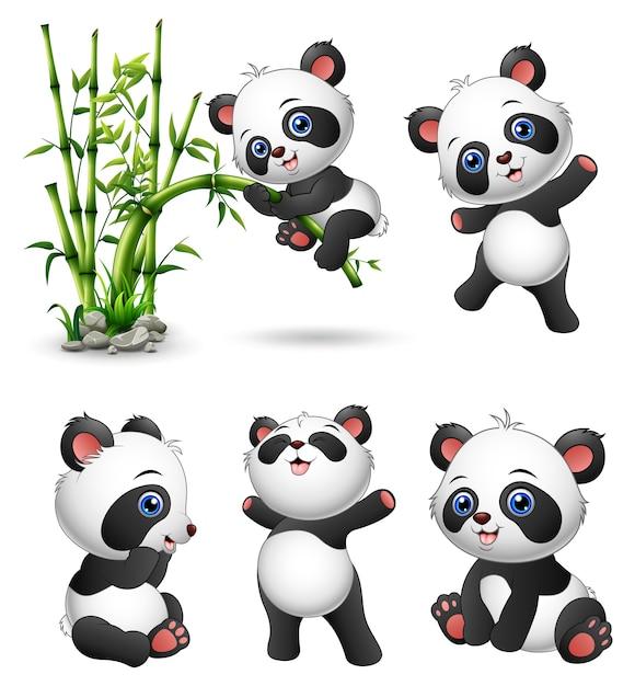 Coleção de pandas bebê fofo Vetor Premium