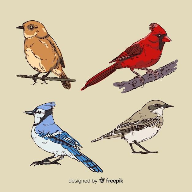 Coleção de pássaro tropical desenhada de mão Vetor grátis