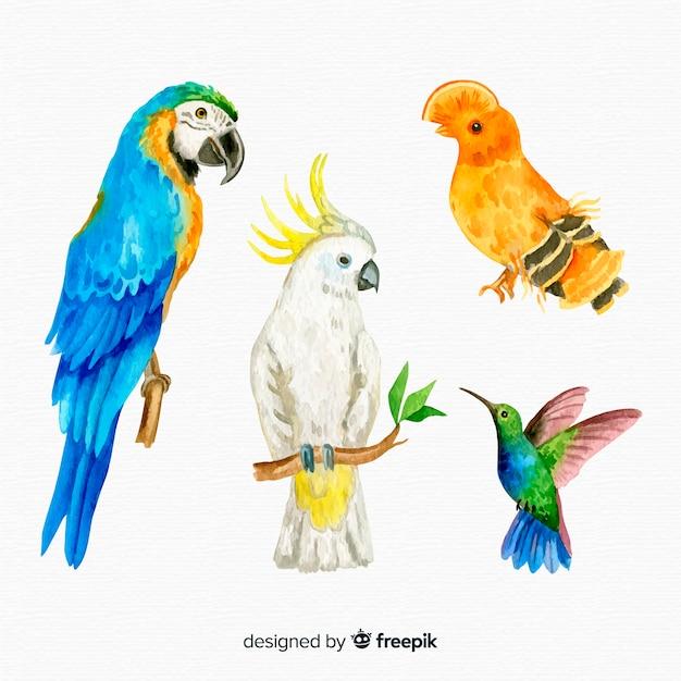 Coleção de pássaros exóticos aquarela Vetor grátis