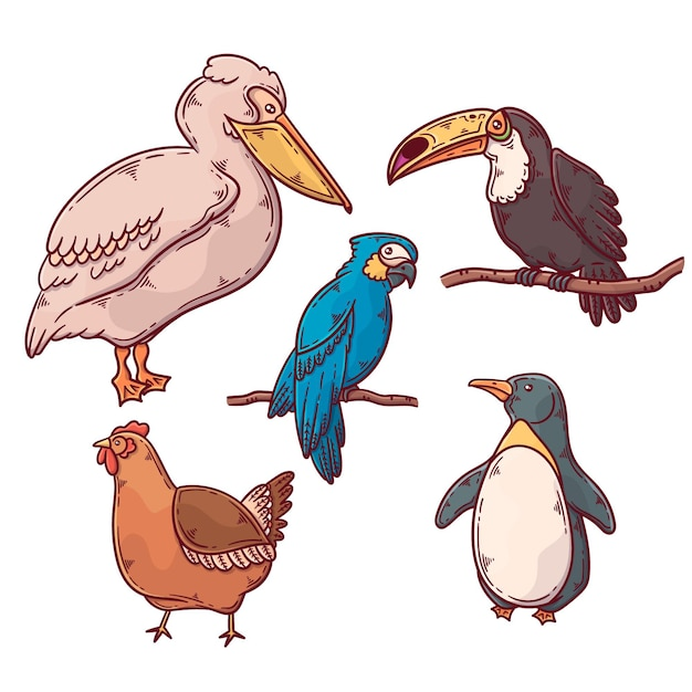Coleção de pássaros exóticos e domésticos Vetor grátis
