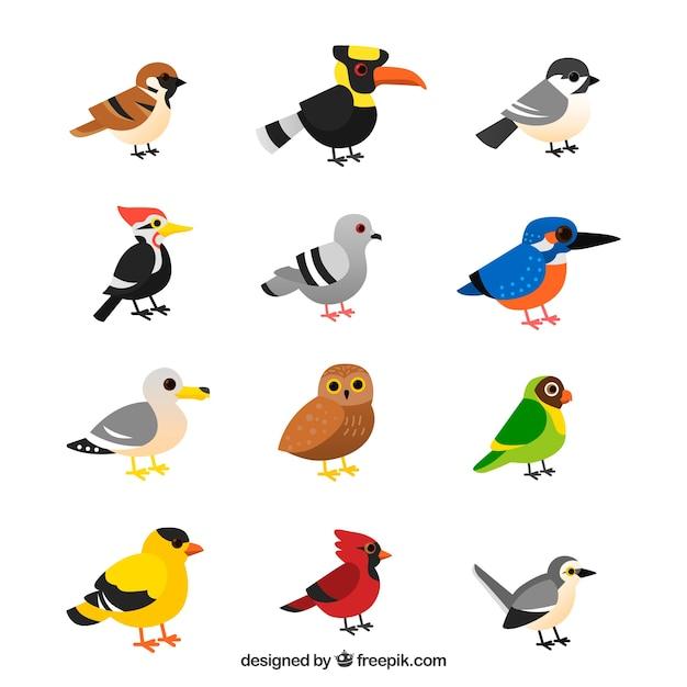 Coleção de pássaros tropicais Vetor grátis