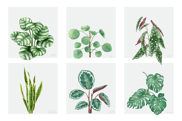Coleção de plantas de mão desenhada isolado no fundo branco Vetor grátis