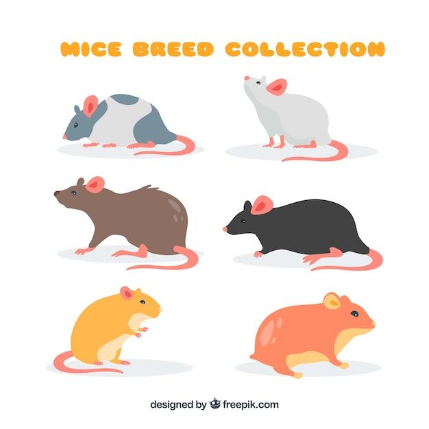 Coleção de raças de ratos Vetor grátis