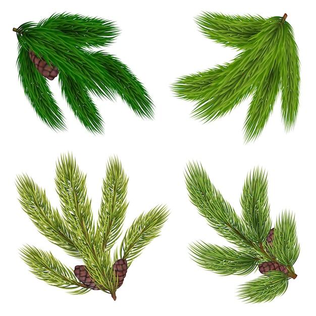 Coleção de ramos verdes de árvores coníferas Vetor grátis