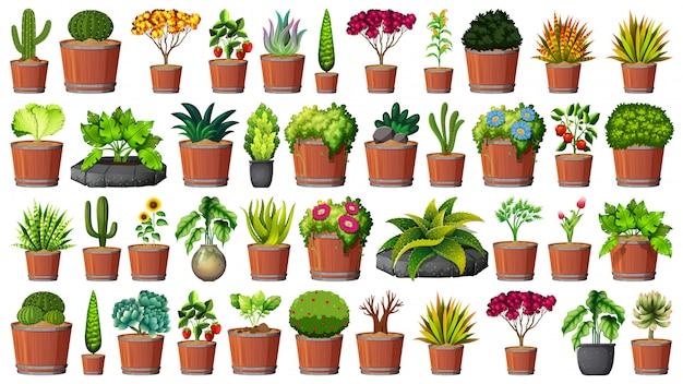 Coleção de vasos de plantas em branco Vetor grátis