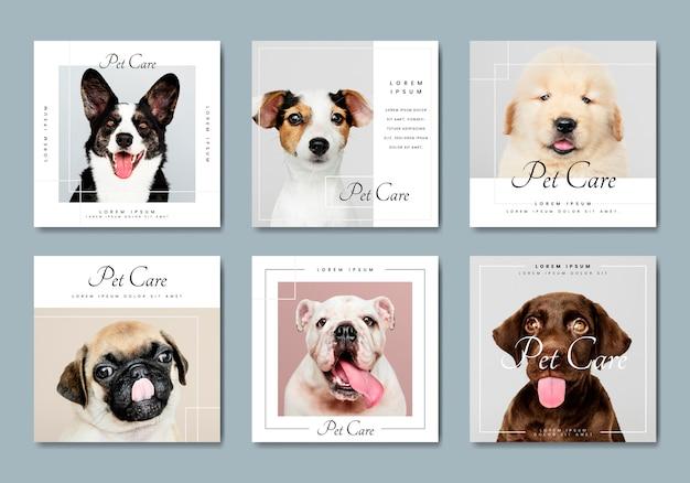Coleção de vetores de modelo de banner de cuidados com animais de estimação Vetor Premium