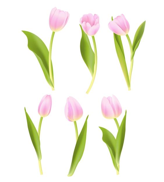 Coleção de vetores tulipa rosa Vetor Premium