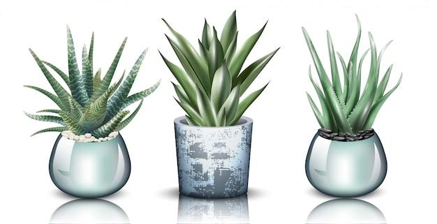 Coleção detalhada de plantas de aloe vera Vetor Premium