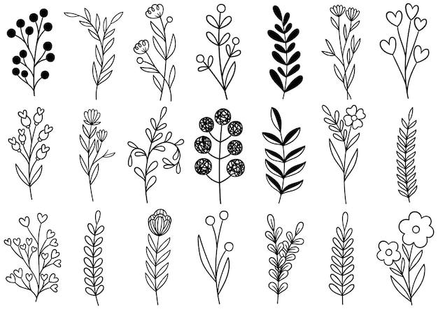 Coleção floresta samambaia arte eucalipto ilustração folhagem Vetor Premium