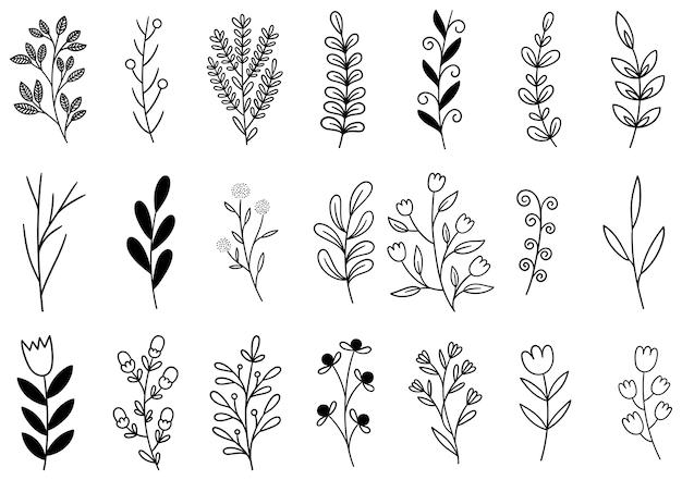 Coleção floresta samambaia e eucalipto arte folhagem Vetor Premium