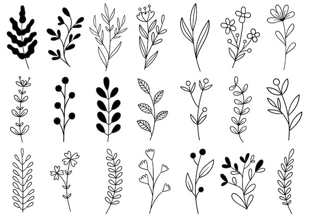 Coleção floresta samambaia eucalipto arte folhagem folhas naturais ervas em estilo de linha. flor desenhada à mão Vetor Premium