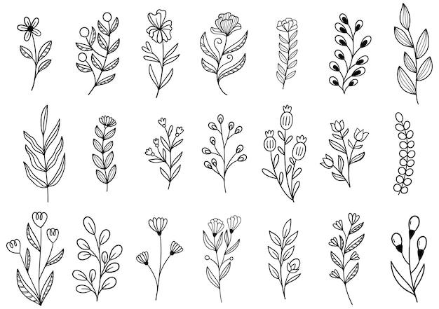 Coleção floresta samambaia eucalipto arte folhagem folhas naturais ervas em estilo de linha. Vetor Premium