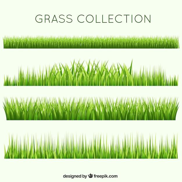Coleção grama jardim diferente Vetor grátis