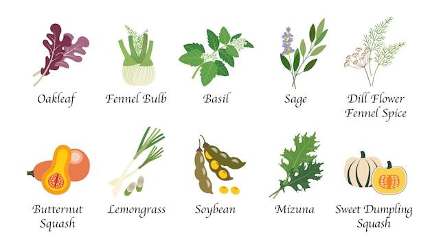 Coleção isolada de especiarias, vegetais, alimentos naturais, natureza orgânica Vetor Premium