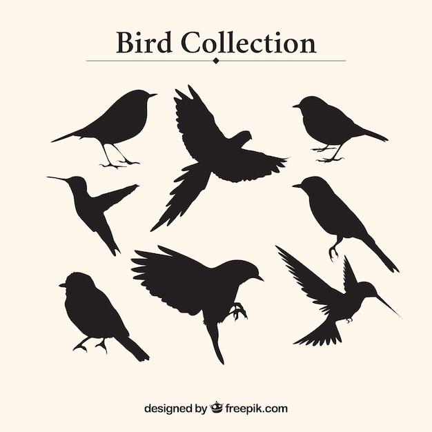 Coleção silhuetas do pássaro Vetor Premium