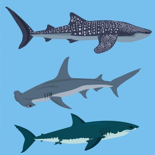Coleção tubarões colorido Vetor grátis