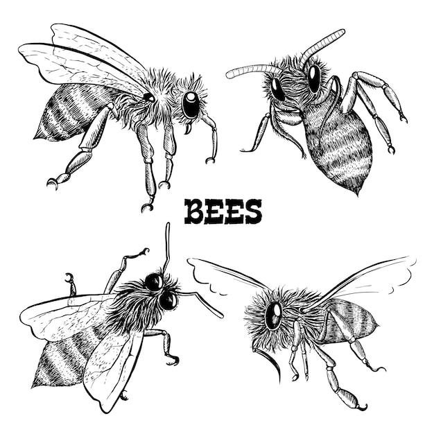 Coleções de ícones de abelha de mel Vetor grátis