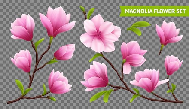 Colorido e isolado magnólia realista flor transparente ícone definido com filial na transparente Vetor grátis